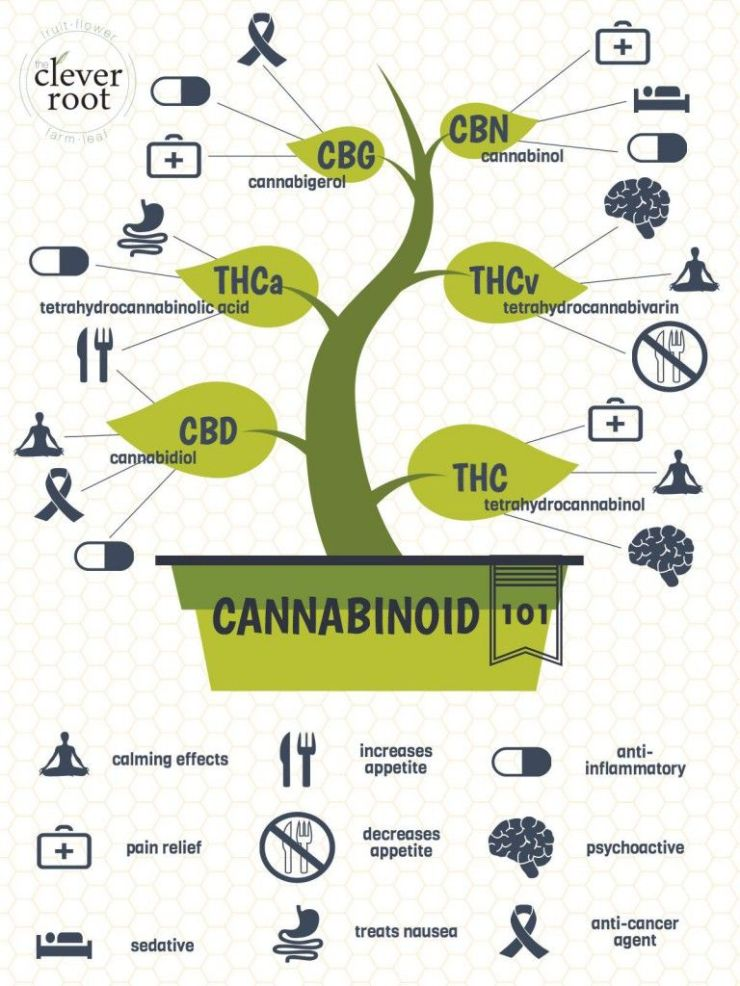 Top 5 CBD Burning Questions and Answers